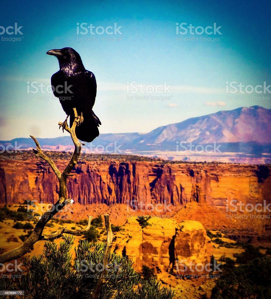 Raven's View stock photo