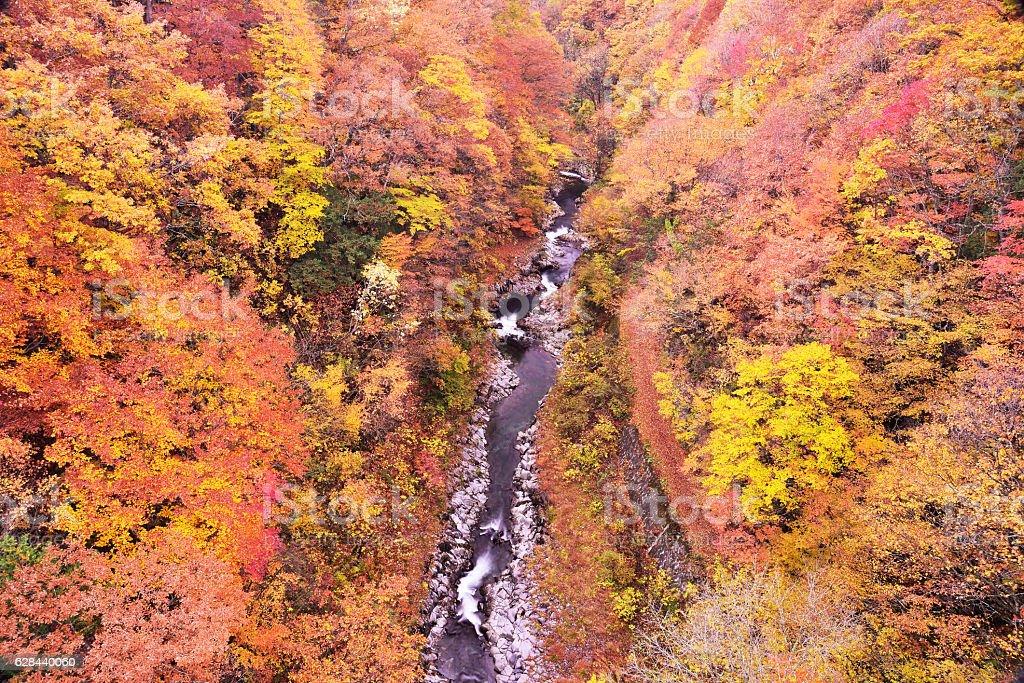 ravine stock photo