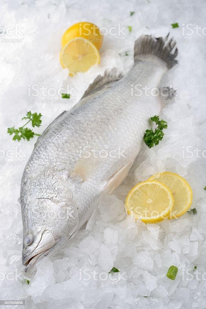 Raw Barramundi Fish stock photo