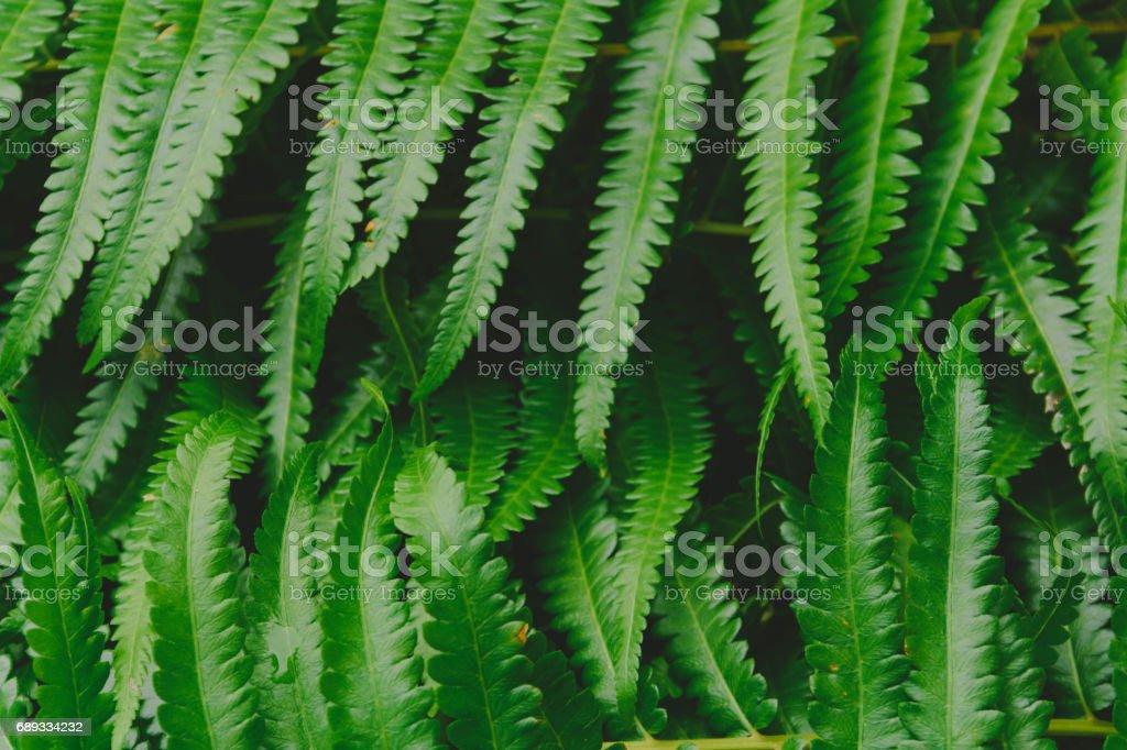 raw bracken greenery forest pattern background stock photo