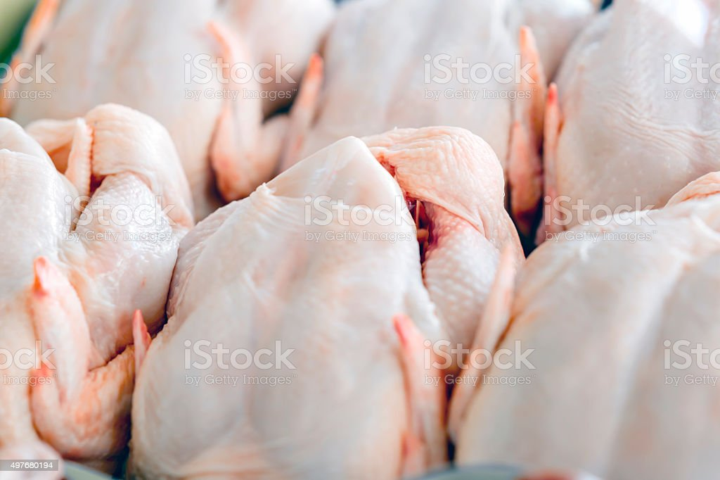 Raw  butchered chicken stock photo
