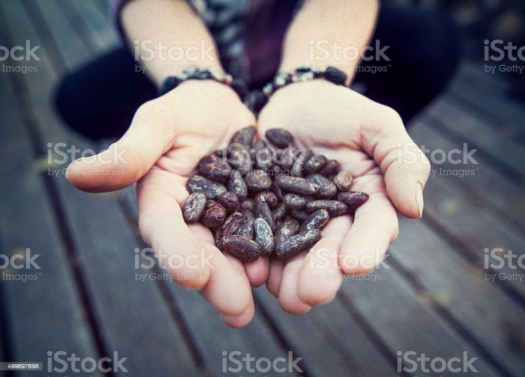 Raw Cacao Beans stock photo