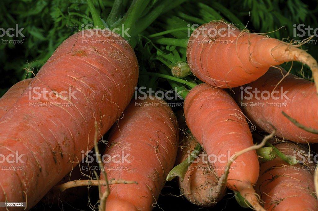Raw carrots royalty-free stock photo