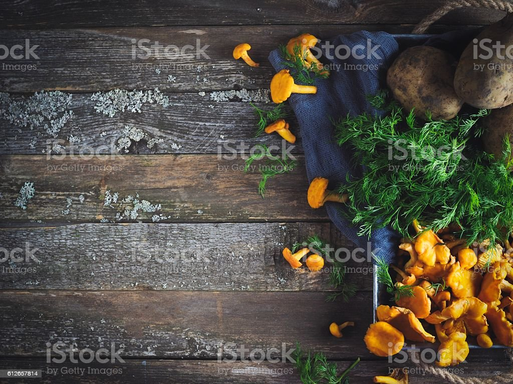 Raw chanterelle in tin tray on wooden table stock photo