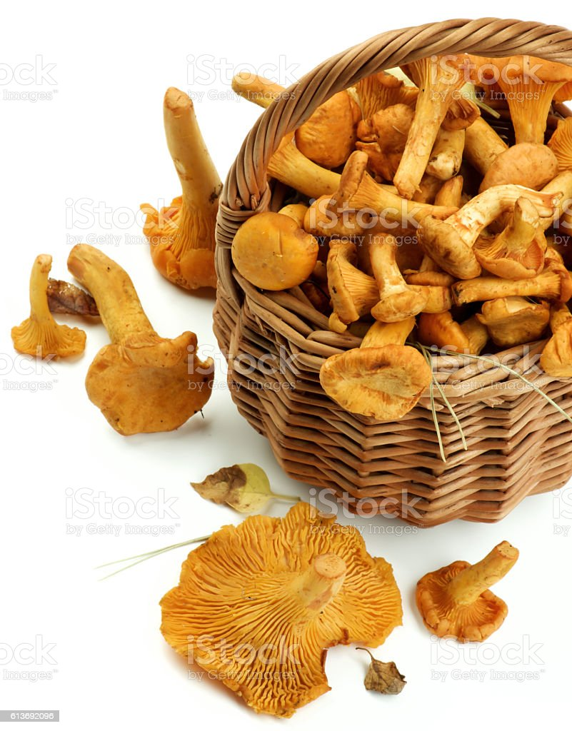 Raw Chanterelles Mushrooms stock photo