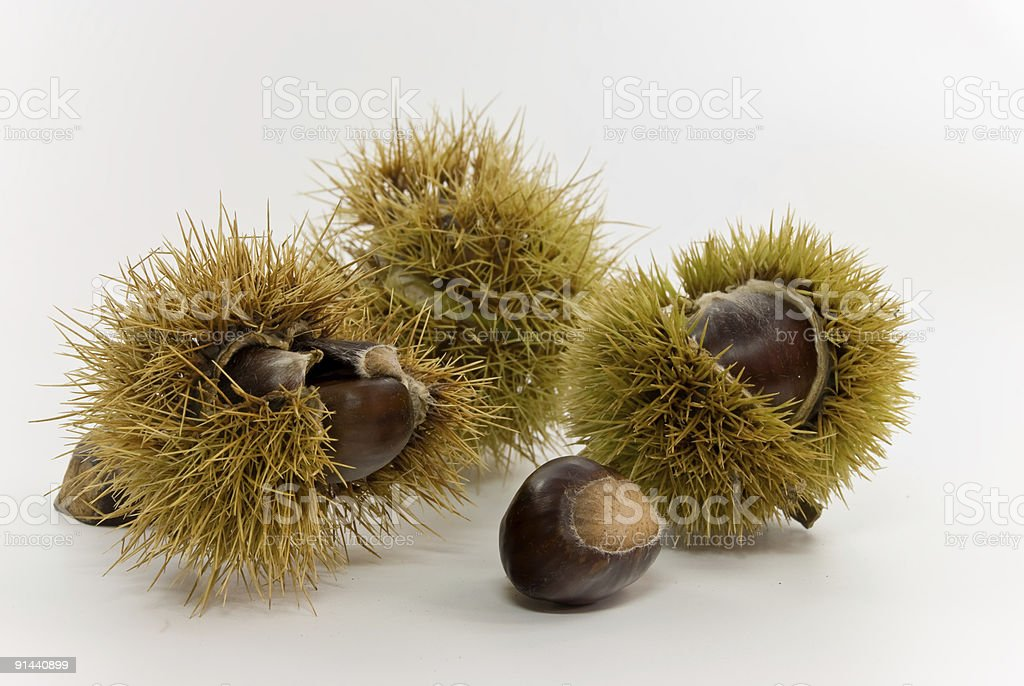raw chestnuts.close - up royalty-free stock photo