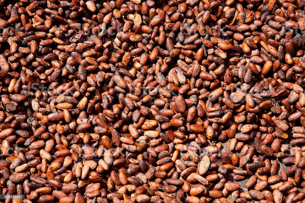 Raw cocoa beans during fermentation stock photo