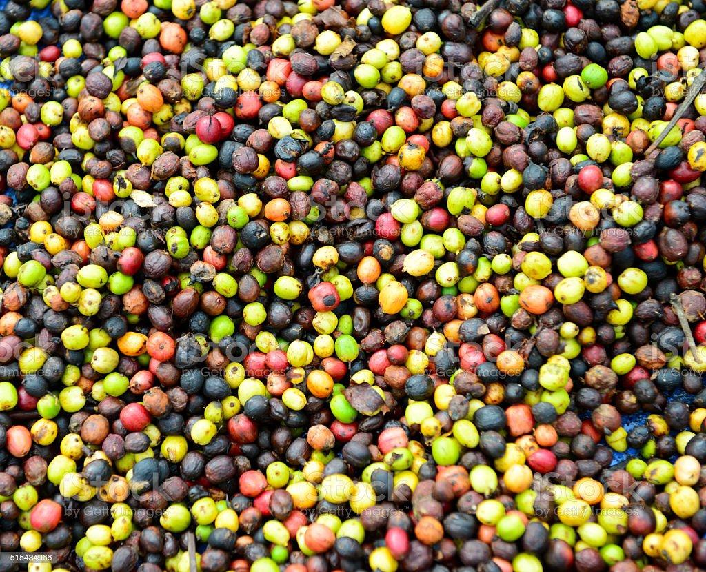 Raw Coffee Bean stock photo