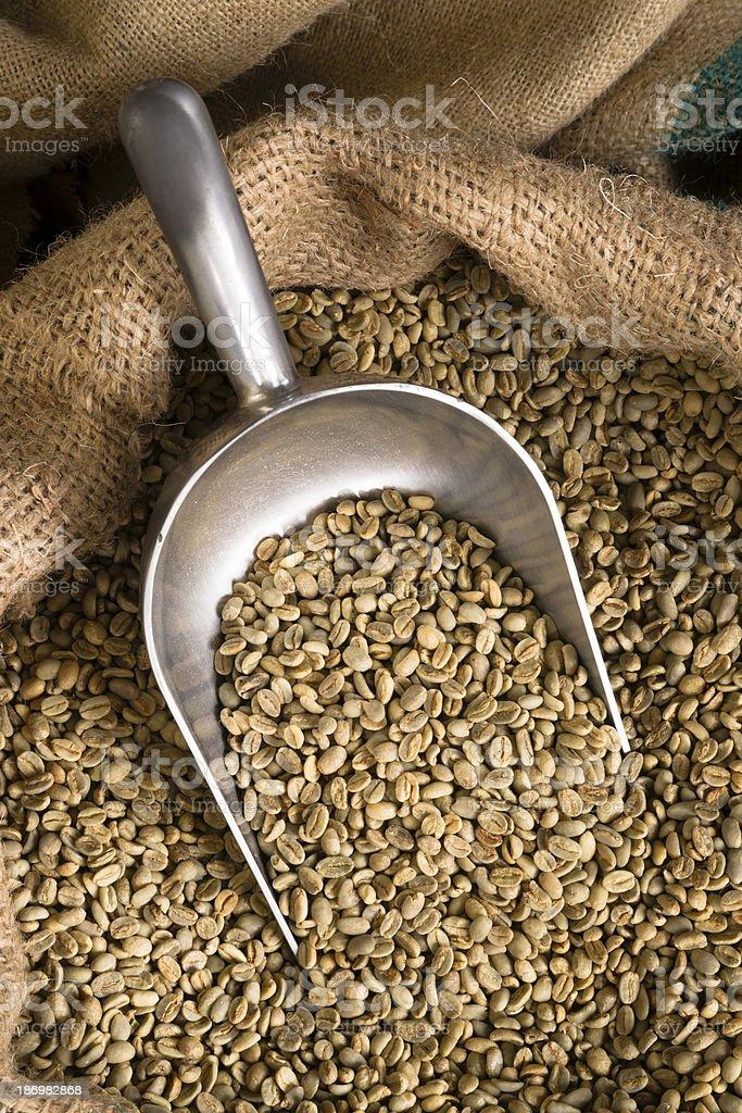 Raw Coffee Seeds Bulk Scoop Burlap Bag Agriculture Bean royalty-free stock photo