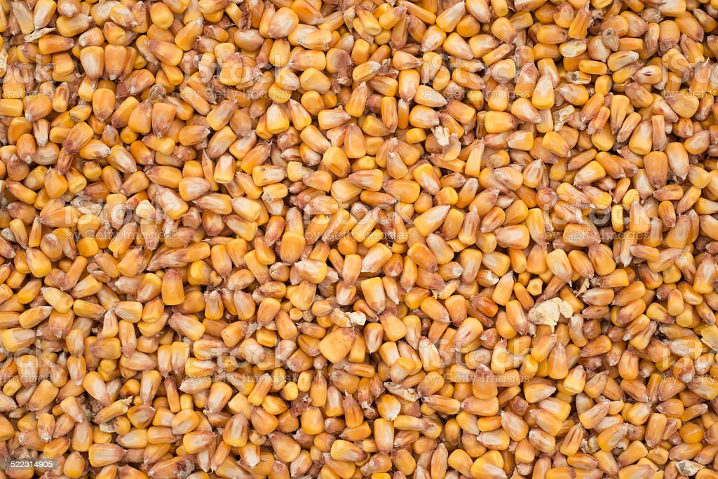 raw corn texture background royalty-free stock photo