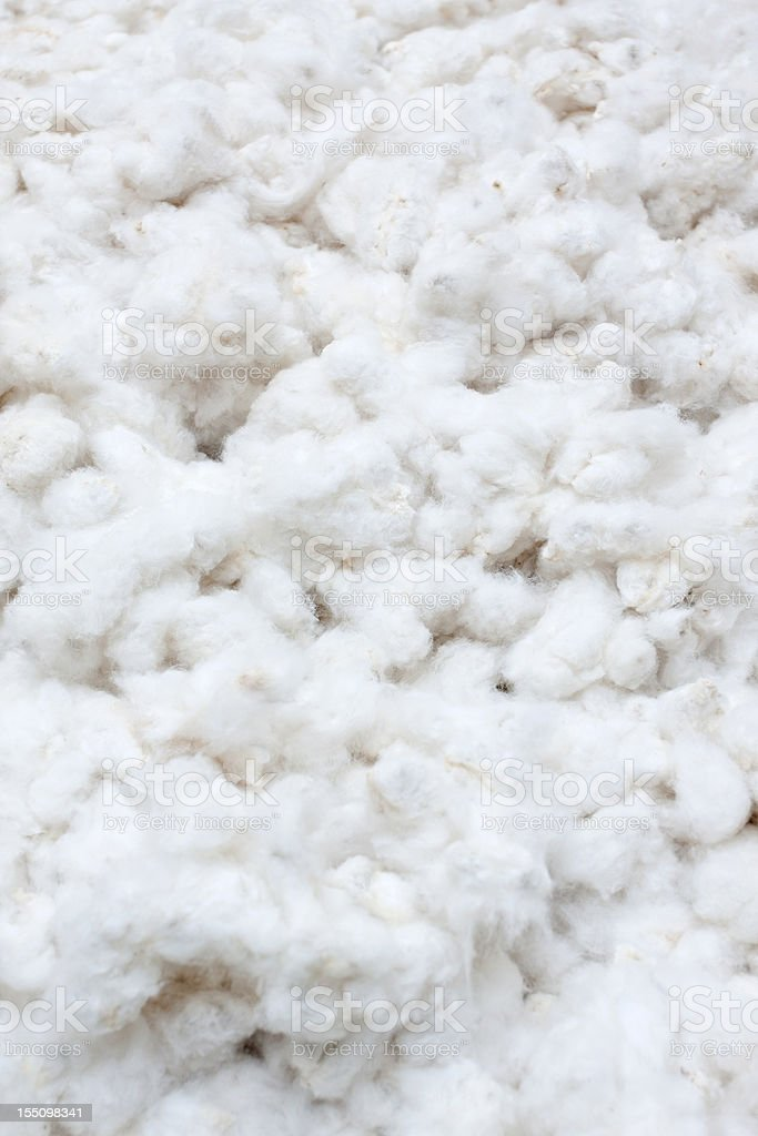 Raw Cotton Crops royalty-free stock photo