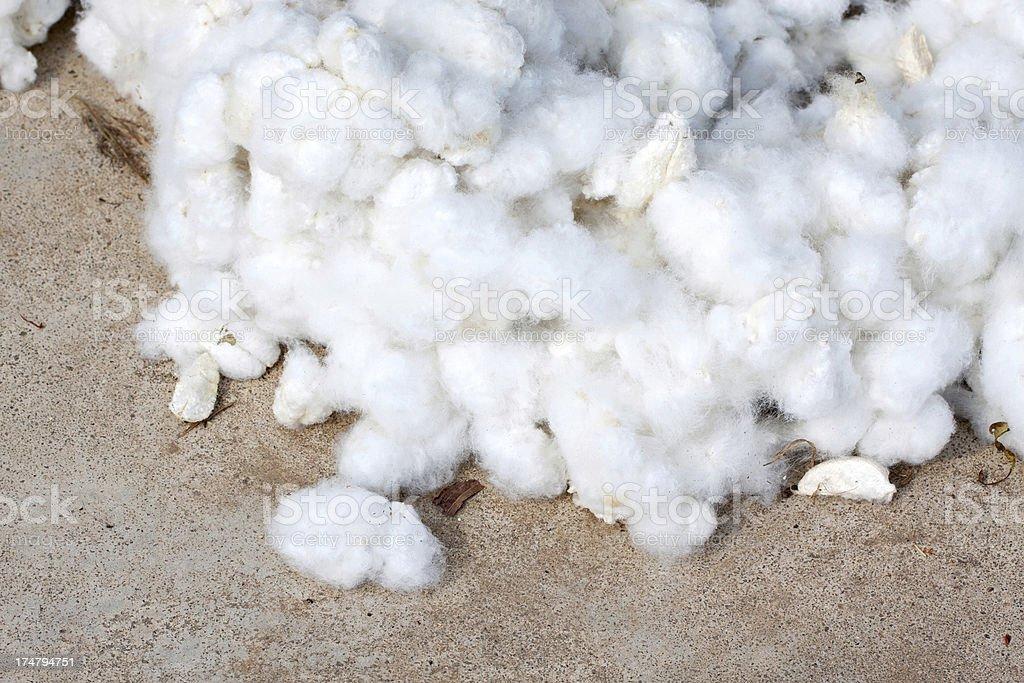 Raw Cotton Crops stock photo