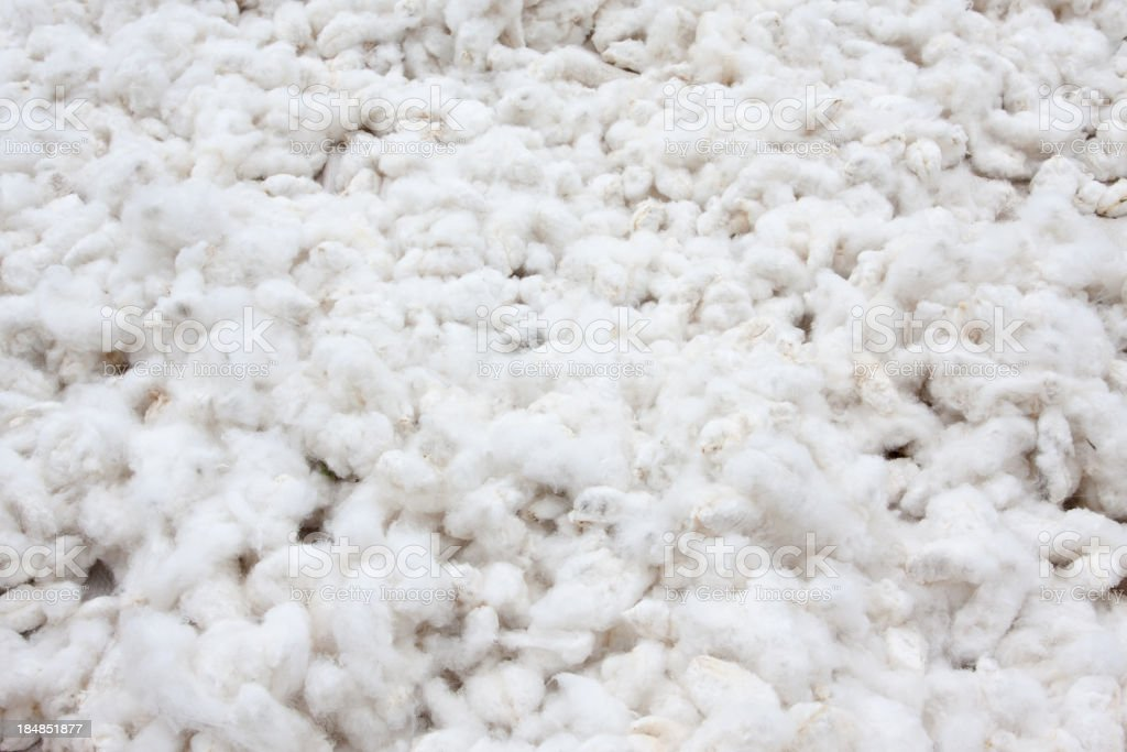 Raw Cotton Crops stock photo