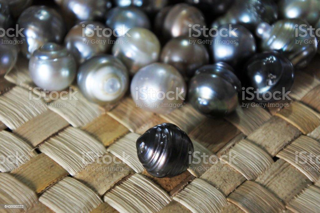 Raw Fiji Black lip oyster black pearls stock photo