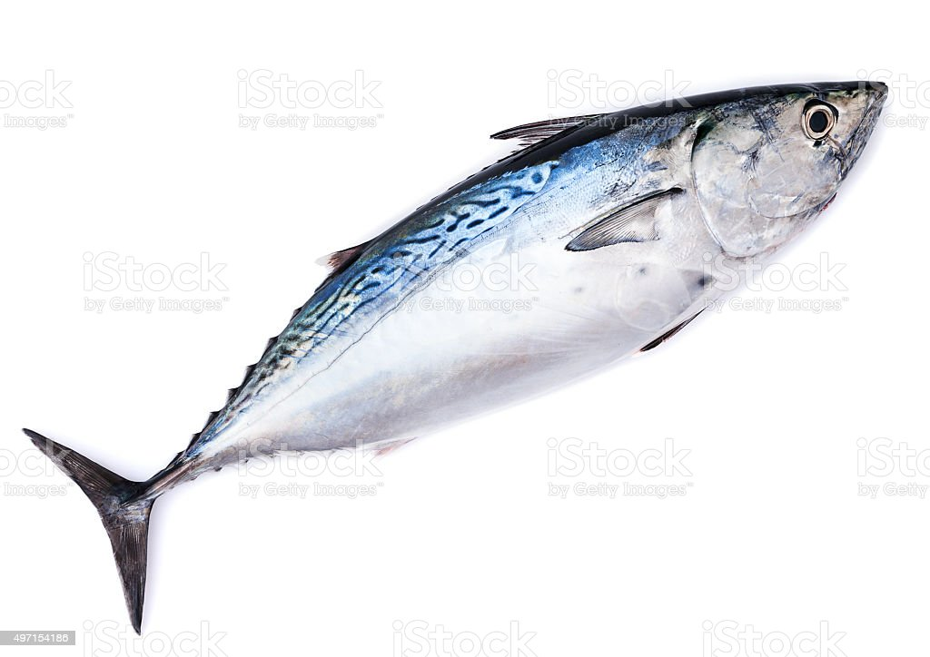 Raw fish, bonito, isolated on white stock photo