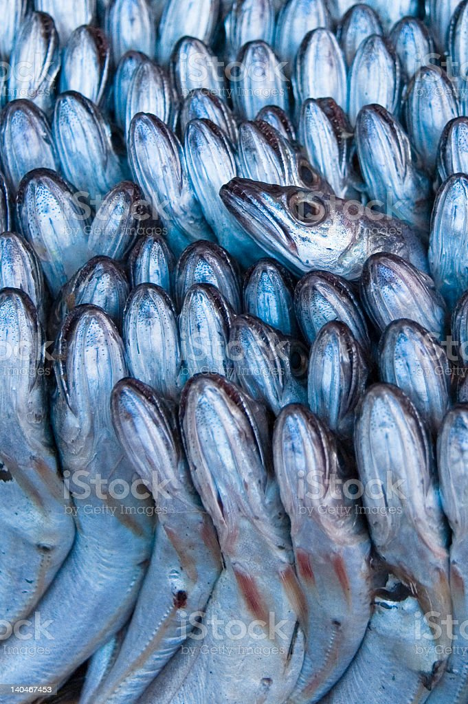 Raw fish closely packed togeter for sale royalty-free stock photo