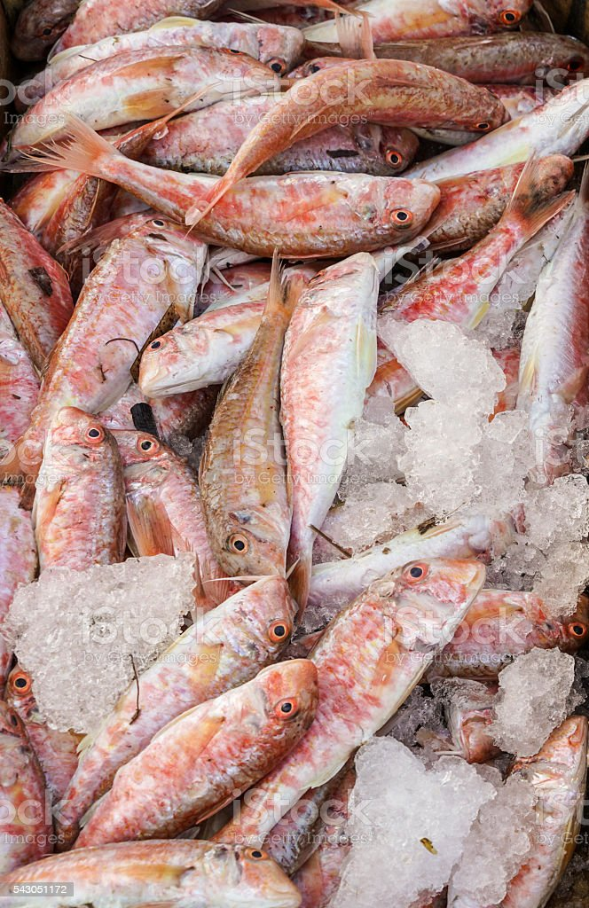 raw fish stock photo