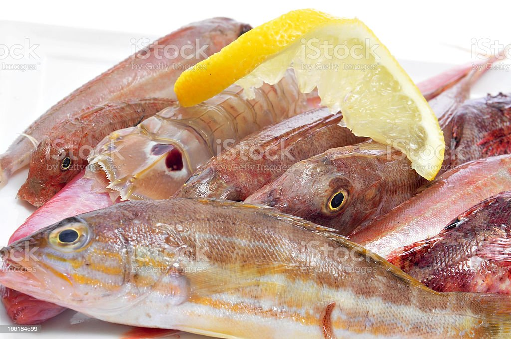 raw fishes from the mediterranean sea royalty-free stock photo