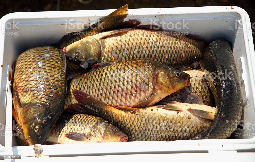 Raw fresh fish stock photo