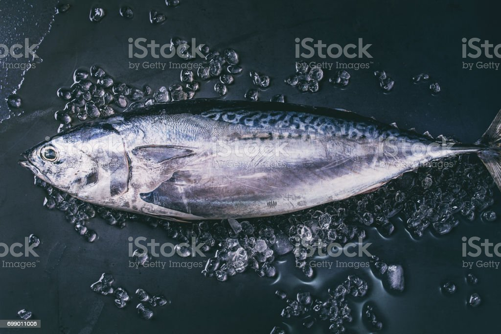 Raw fresh tuna fish stock photo