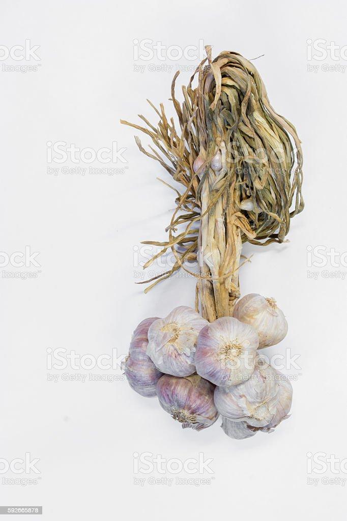 Raw garlic on white background stock photo