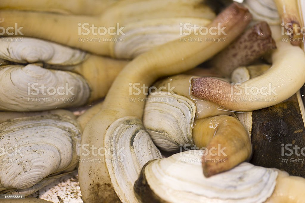 Raw Geoduck for Sale at Seafood Market stock photo