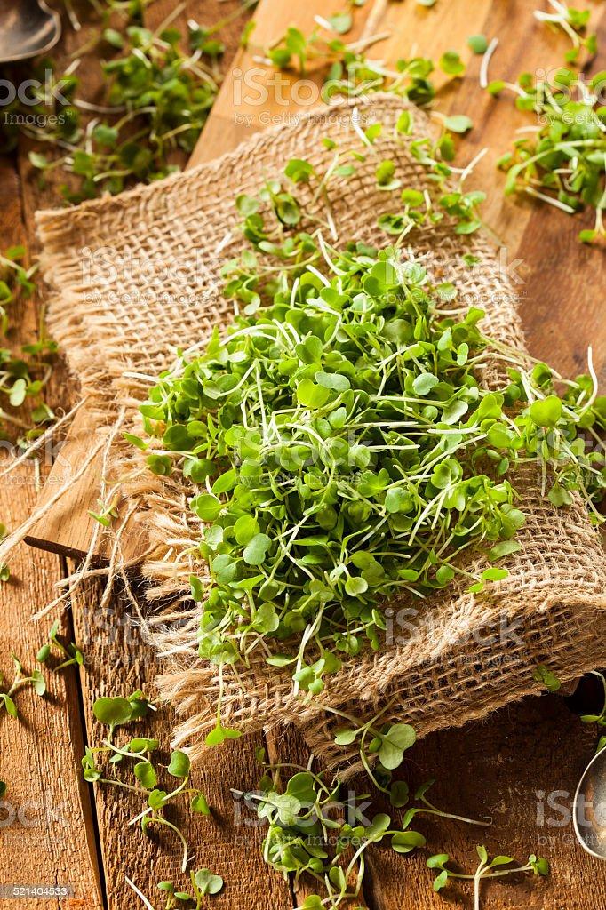 Raw Green Arugula Microgreens stock photo