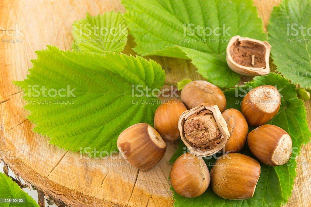 Raw hazelnuts on a green leaf stock photo