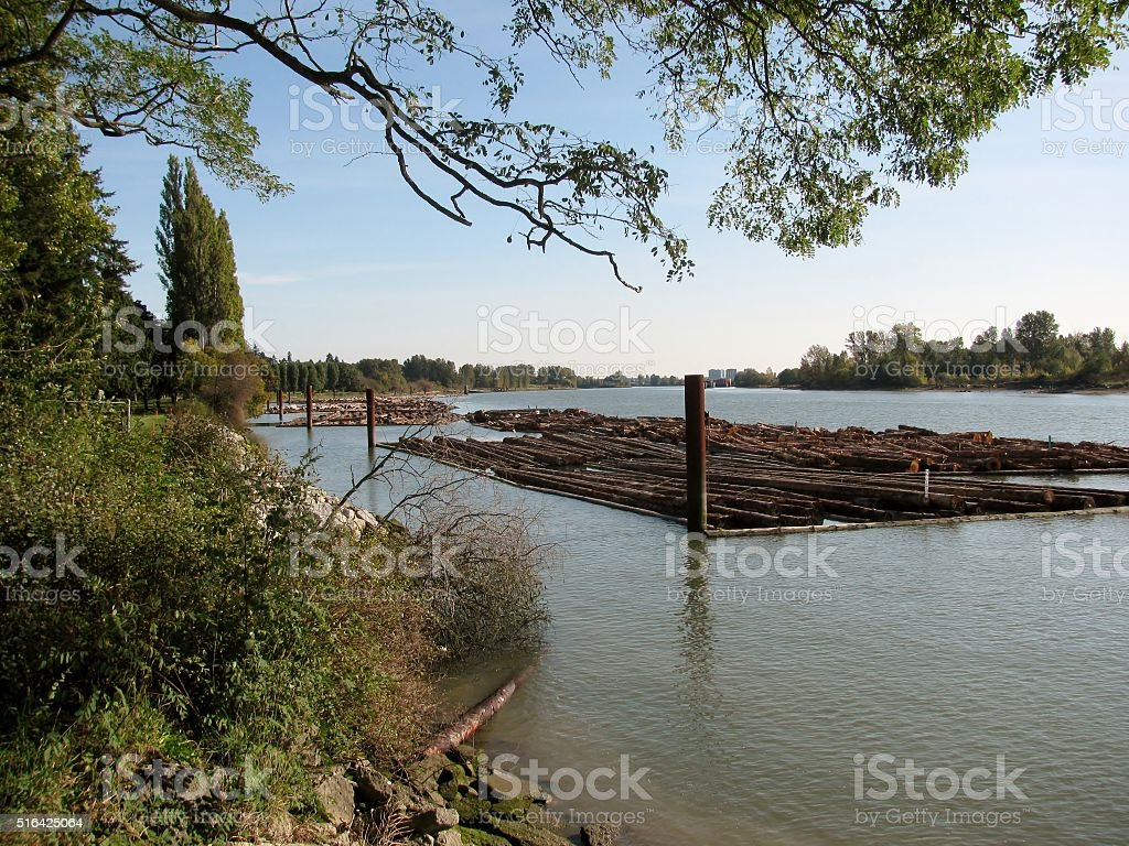 Raw logs floating down the river. stock photo