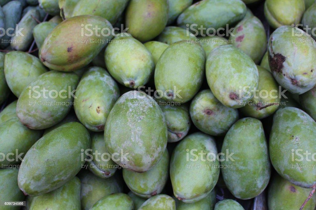 raw mango stock photo