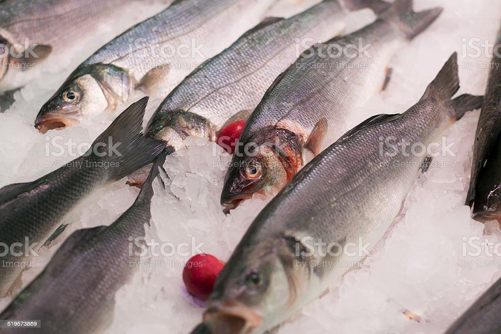 Raw mediterranean seabass stock photo