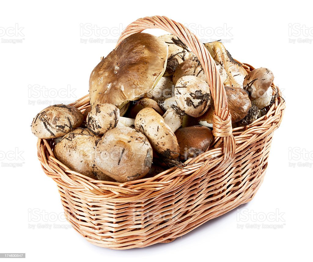 Raw mushrooms in a basket royalty-free stock photo