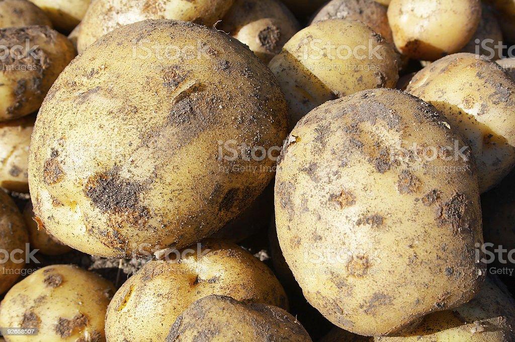 raw new potatoes stock photo