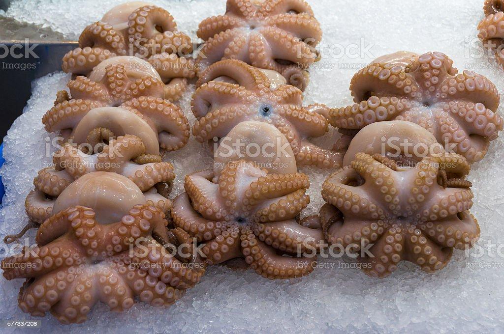 Raw octopus store display stock photo