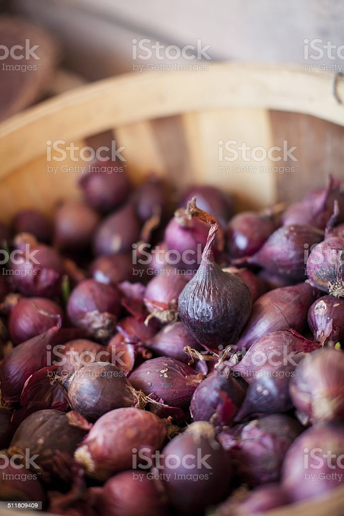 Raw Onions in Basket stock photo