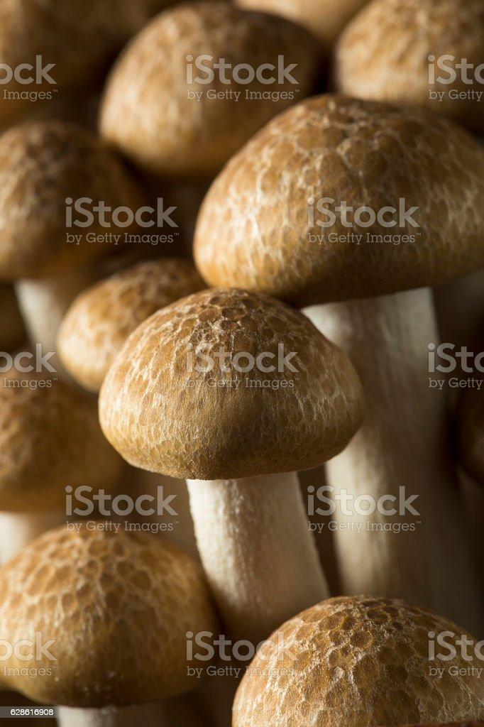 Raw Organic Brown Beech Mushrooms stock photo