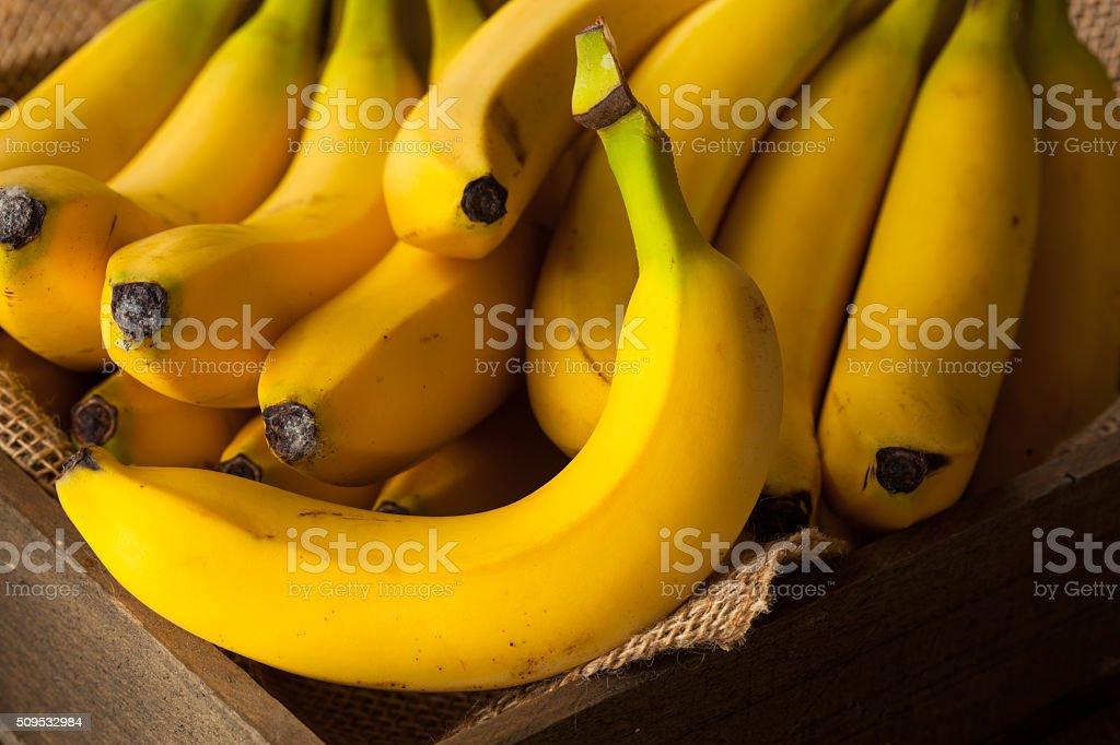 Raw Organic Bunch of Bananas stock photo