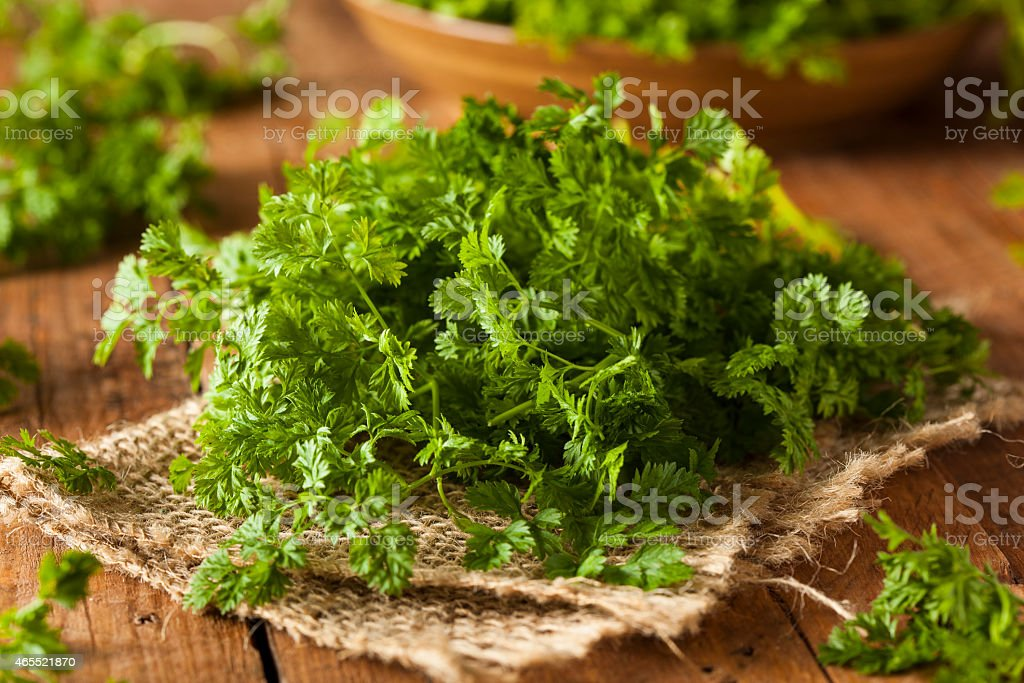 Raw Organic French Parsley Chervil stock photo