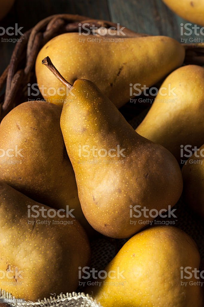 Raw Organic Green and Brown Bosc Pears stock photo