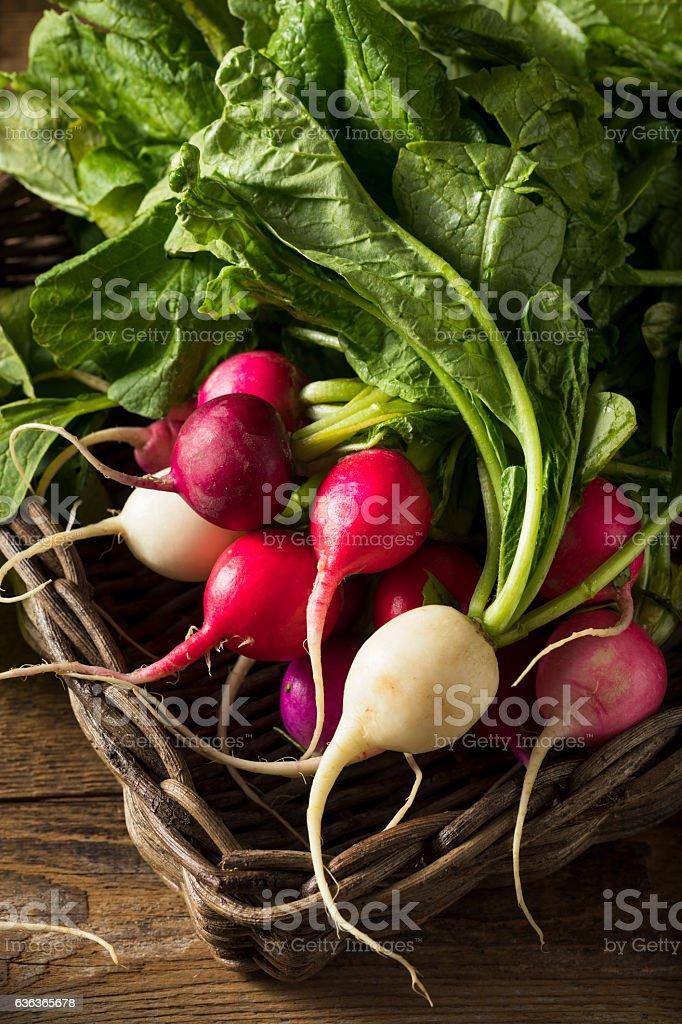 Raw Organic Muli Colored Easter Radishes stock photo
