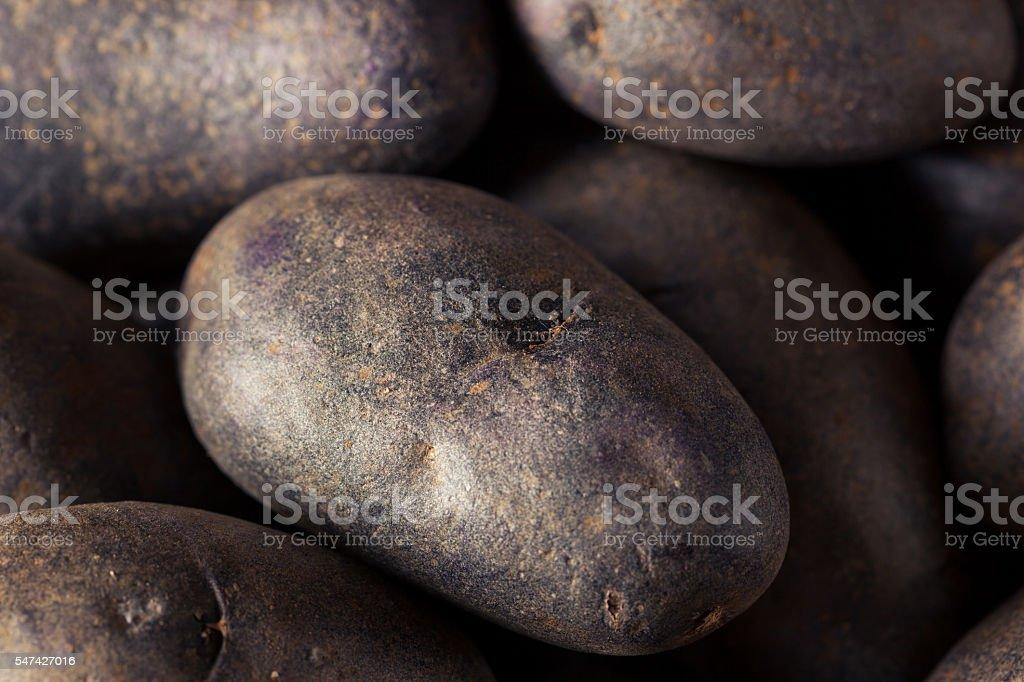 Raw Organic Purple Potatoes stock photo