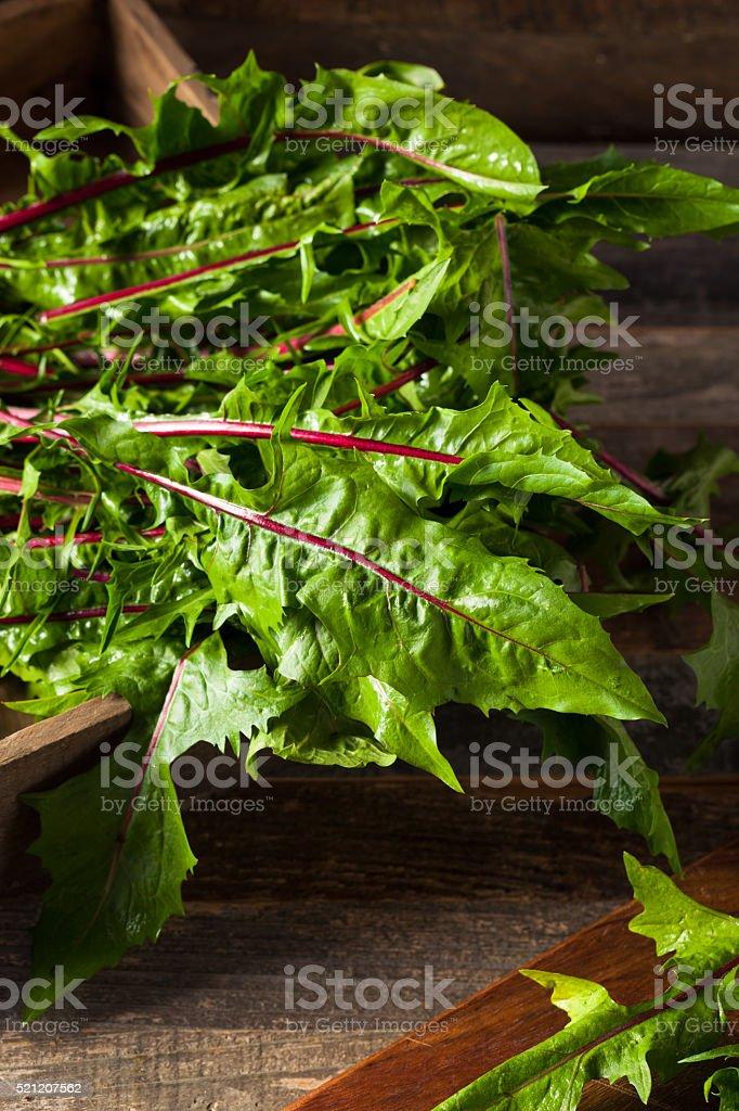 Raw Organic Red Dandelion Greens stock photo