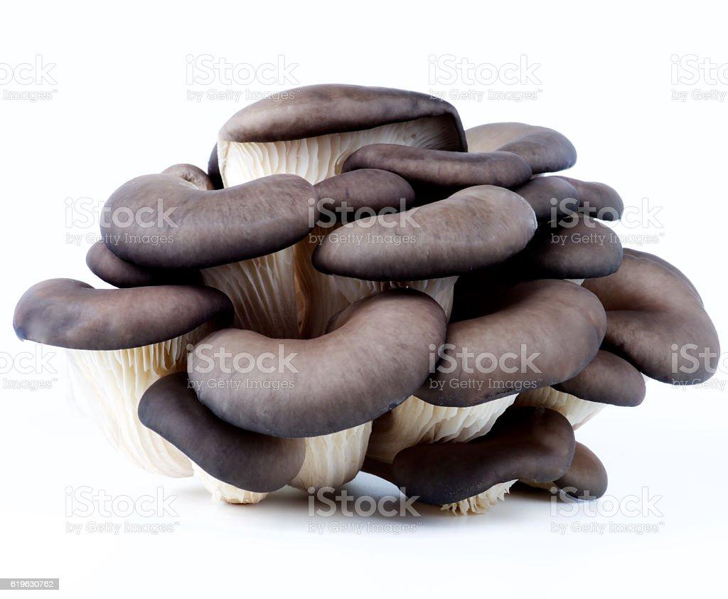 Raw Oyster Mushrooms stock photo