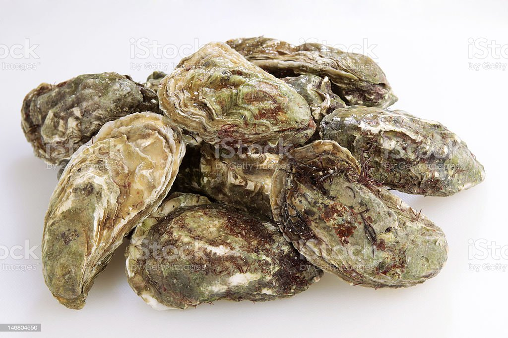 Raw oysters in a pile royalty-free stock photo