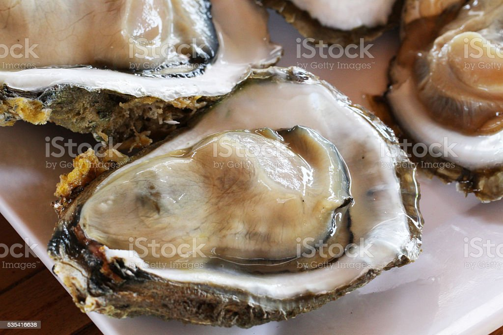 Raw Oysters in a Shell stock photo
