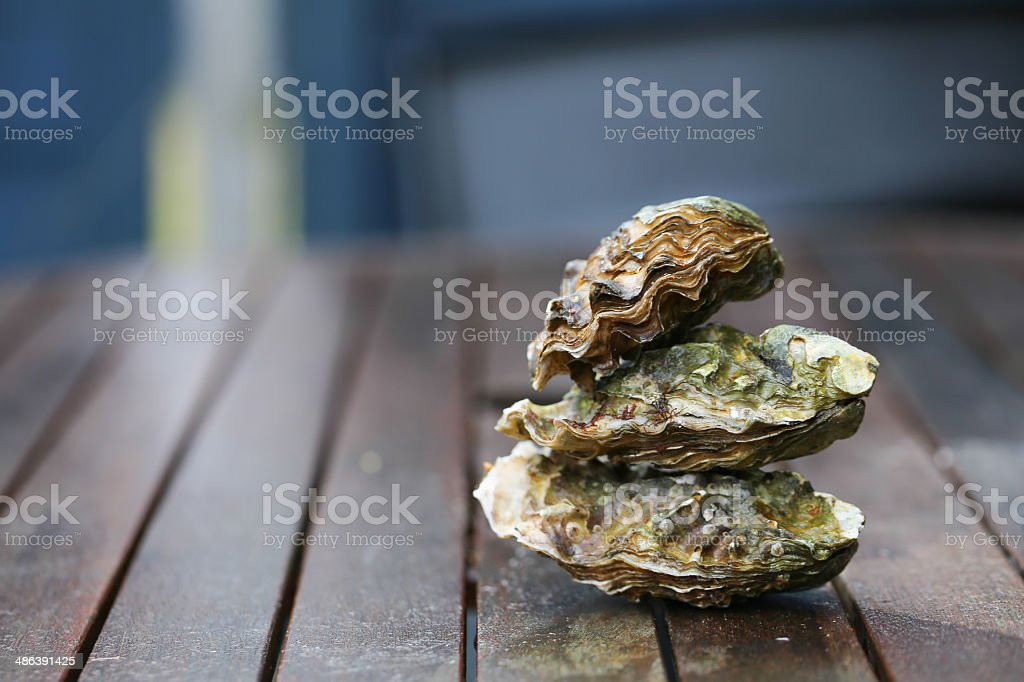 Raw oysters stock photo