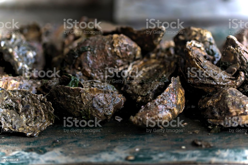 Raw oysters production line stock photo