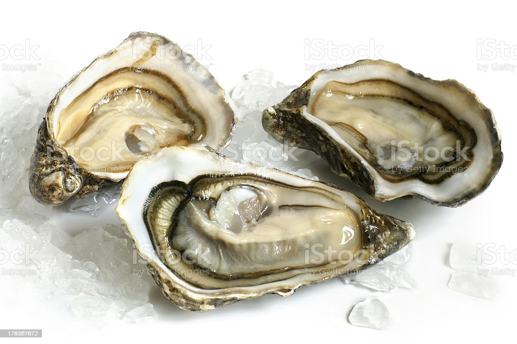 Raw oysters with ice stock photo