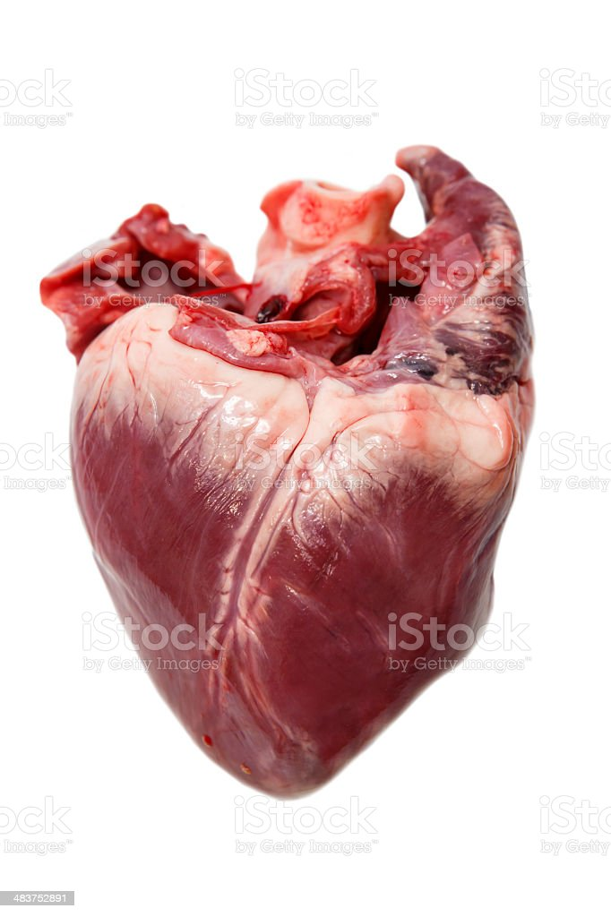 Raw pork heart stock photo