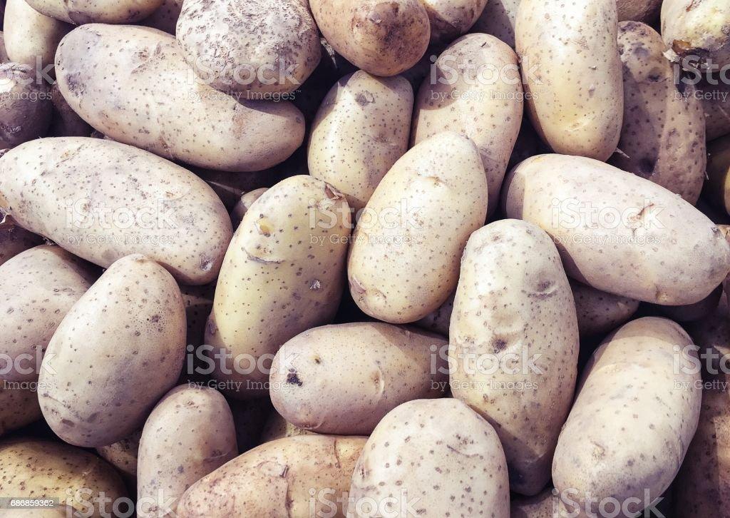Raw Potato in the market, close up stock photo